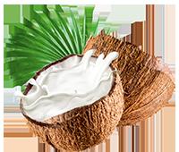 tsoap object coconut